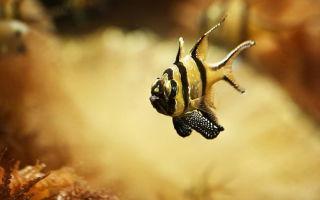 Как оборудовать аквариум
