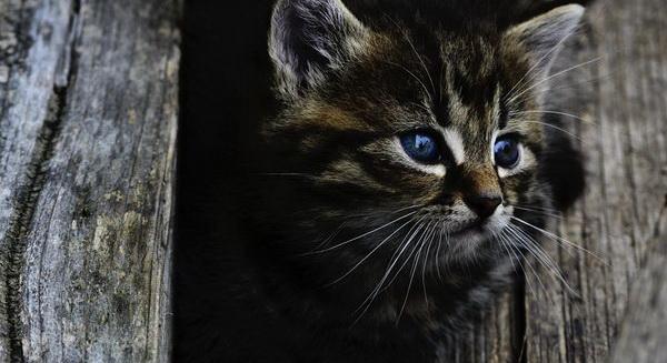 что означает выражение кот наплакал